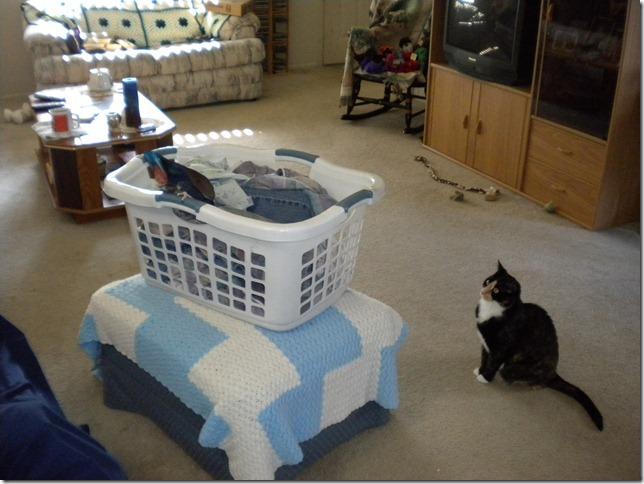 Merlin, Sassy and Laundry