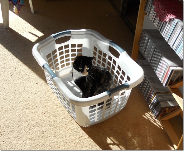 Sassy in the laundry basket