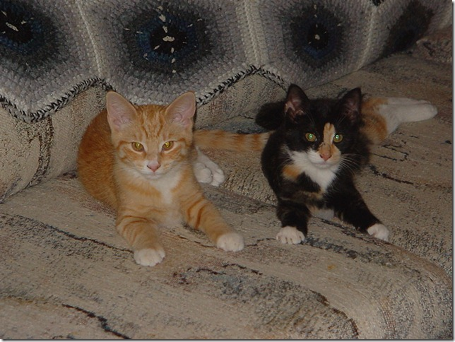Sassafrass and Nekoka as kittens