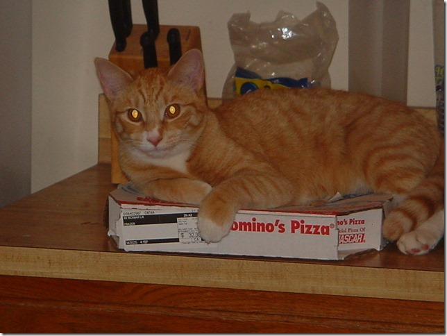 Nekoka and Pizza, December 2005