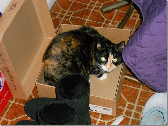 Sassy and the Ugg box
