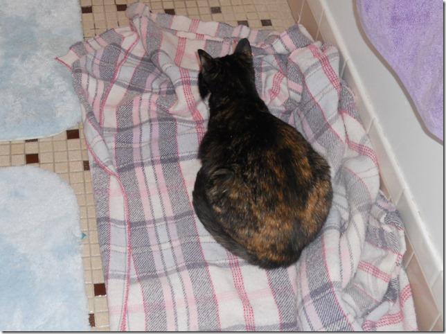 Sassafrass on her blanket
