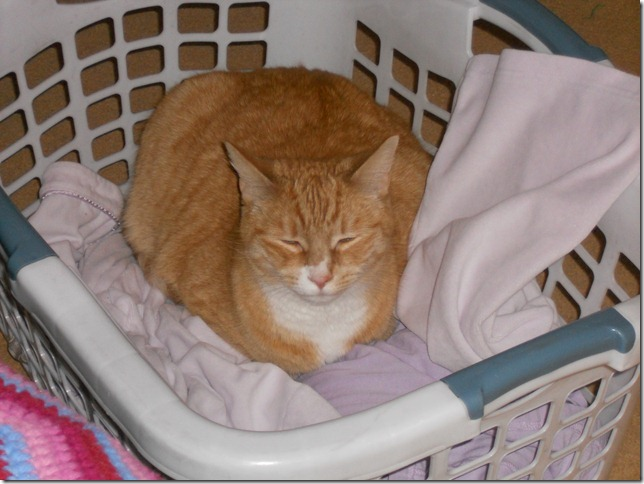 Nekoka in the laundry basket