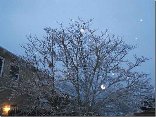 Frozen tree is frozen