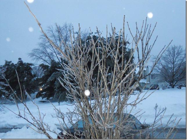 Frozen bush is frozen
