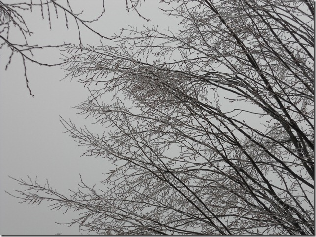 Work trees are grey and frozen