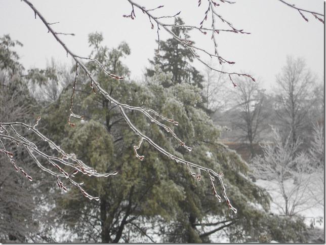 Frozen branch is frozen