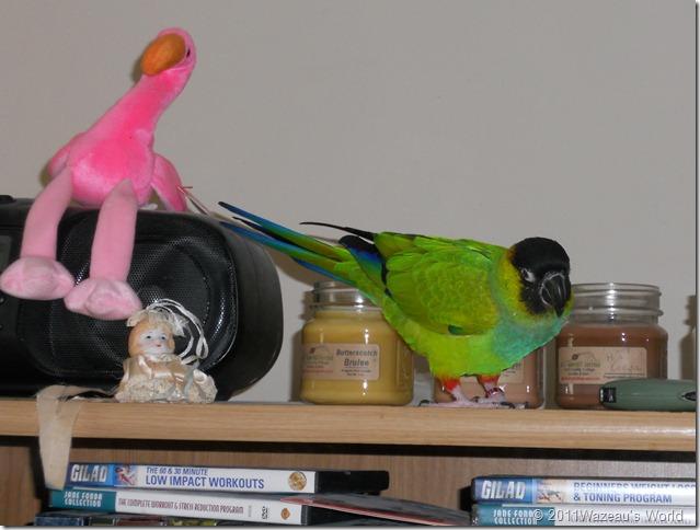 Bandit on the TV shelves