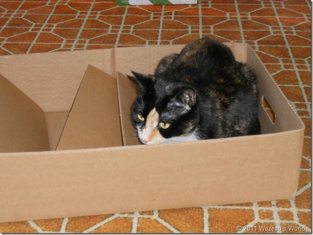 Sass in half a box