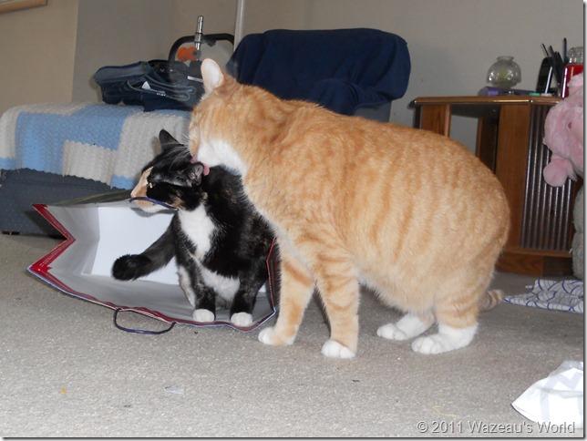 Sassafrass getting a kiss