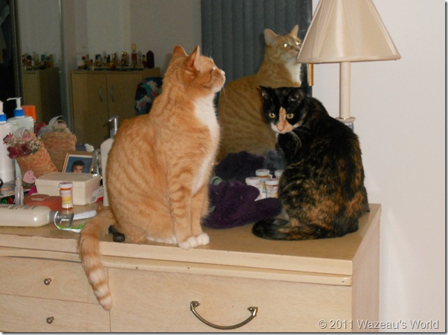 Nekoka and Sassafrass on my dresser