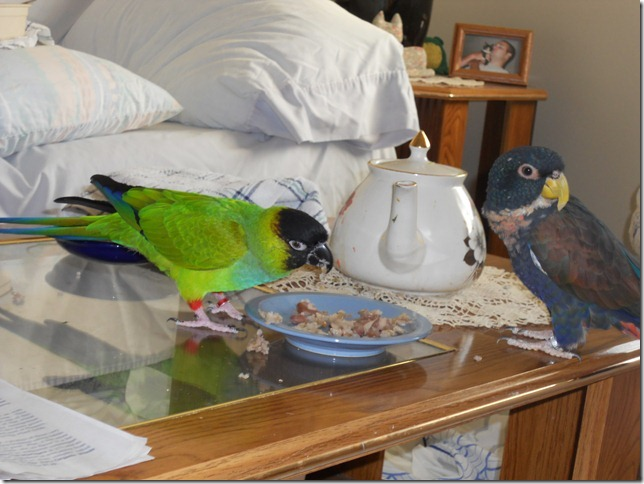 Merlin asking me to get Bandit out of his dish.