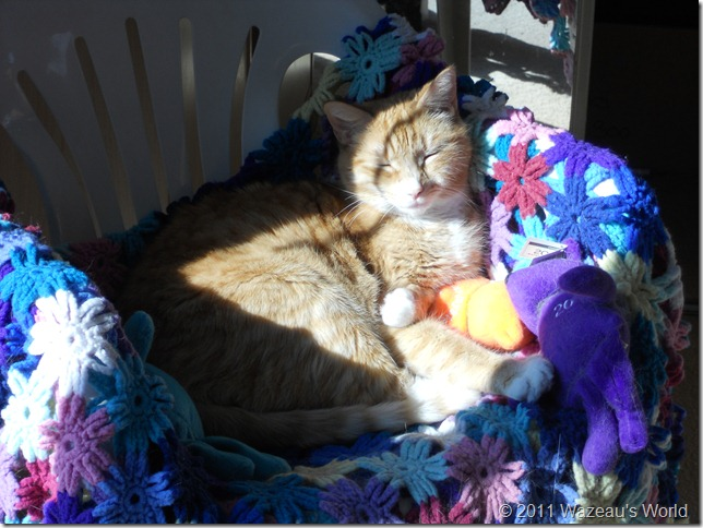 Nekoka basking in the sunlight