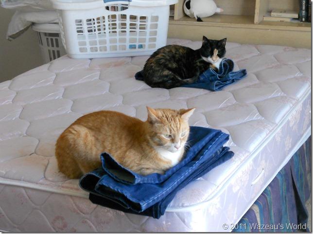 Nekoka and Sassafrass chilling on my laundry
