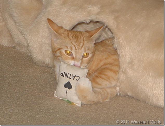 I Love Catnip