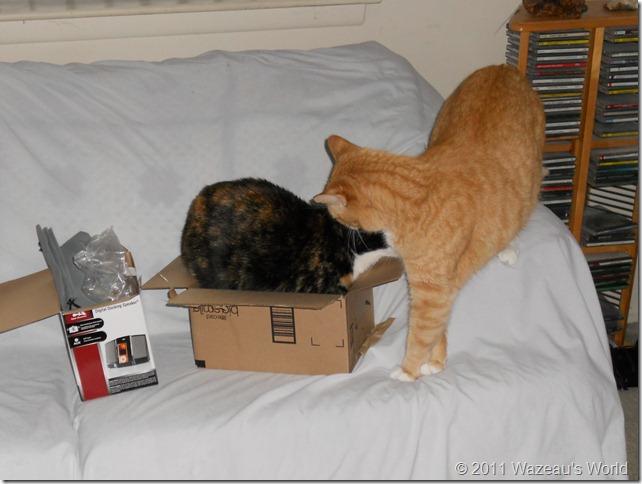 Nekoka gives Sass a kiss on the head