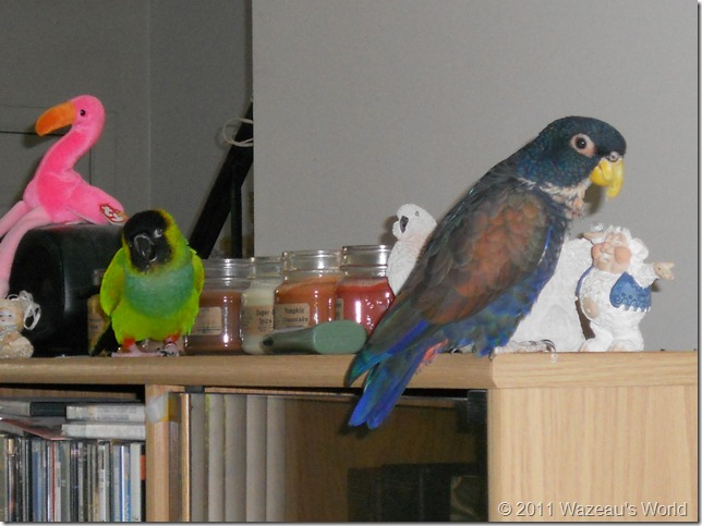 Bandit throws Merlin a wink as they investigate the top of the cabinet.