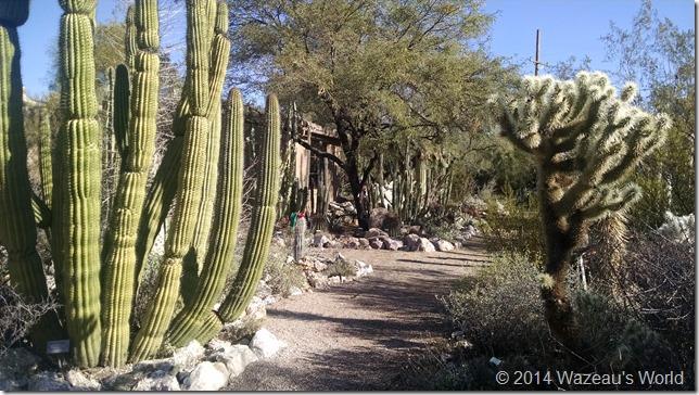 Tucson Botanical Gardens, Cactus area